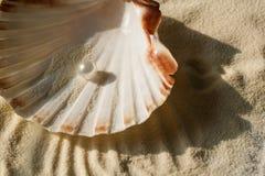 Жемчуг в seashell Стоковое Изображение