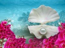 Жемчужная предпосылка воды коралла раковины Стоковые Изображения RF