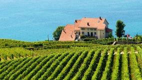 Женевское озеро тропы террас виноградника Lavaux в Швейцарии Стоковые Изображения