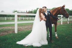 Жених и невеста в лесе с лошадями ювелирные изделия cravat пар кристаллические связывают венчание Красивый портрет в природе Стоковая Фотография RF