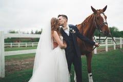 Жених и невеста в лесе с лошадями ювелирные изделия cravat пар кристаллические связывают венчание Красивый портрет в природе стоковая фотография