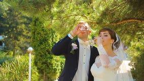 Жених и невеста наслаждаясь шампанским на их торжестве свадьбы акции видеоматериалы