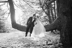 Жених и невеста сидя в целовать дерева Стоковое фото RF