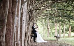 Жених и невеста стоя вдоль строки тройников Стоковое Фото