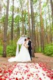 Жених и невеста целуя около свода свадьбы Стоковое Изображение