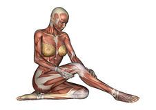 Женская диаграмма анатомии Стоковое Фото