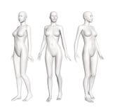 Женская диаграмма анатомии Стоковое Изображение RF