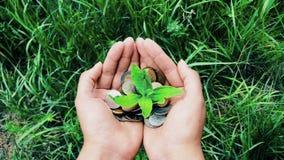 Женская куча удерживания руки монеток с растя заводом, концепцией роста финансов денег акции видеоматериалы
