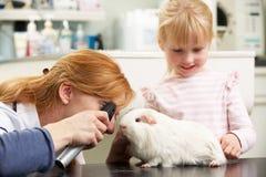Женская морская свинка ветеринарного хирурга рассматривая Стоковые Фото
