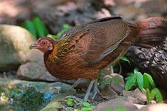 женская птица Стоковые Фото