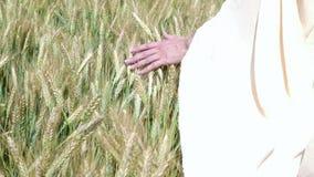 Женская рука бежать через пшеничное поле крупный план ушей пшеницы женской руки касающий хуторянин Принципиальная схема хлебоубор акции видеоматериалы