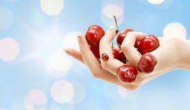 Женская рука вполне красных вишен Стоковая Фотография RF