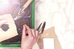 Женская рука засаживая семя в почве Стоковое Изображение
