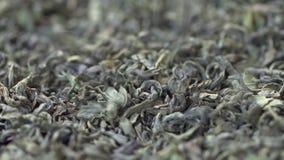 Женская рука комплектует листья чая для заваривать Китайский зеленый чай Высушенный чай выходит предпосылка o Красивый высушенный видеоматериал