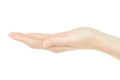 Женская рука открытая, ладонь вверх стоковые изображения rf