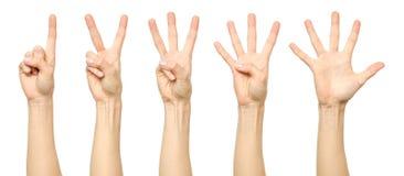 Женская рука подсчитывая от одно к 5 Стоковые Фотографии RF