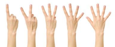 Женская рука подсчитывая от одно к 5 Стоковые Изображения
