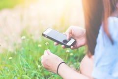 Женская рука фотографирует желтые цветки с передвижным умным телефоном На предпосылке желтых цветков и зеленой травы Стоковое фото RF