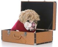 Женская собака внутри чемодана Стоковая Фотография