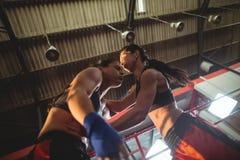 Женские боксеры воюя в боксерском ринге Стоковое Изображение RF
