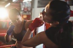 Женские боксеры воюя в боксерском ринге Стоковое Фото