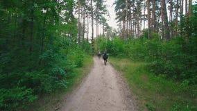 Женские всадники верхом ехать на тропе через лес видеоматериал