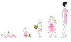 женские растущие этапы вверх Стоковая Фотография RF