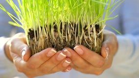 Женские руки держат вне пригорошню почвы с зеленой травой Концепция роста, заботы, устойчивости, защищая землю сток-видео