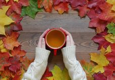 Женские руки держат красную чашку с зеленым чаем на деревянном столе с кленовыми листами Стоковые Изображения RF