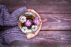 Женские руки держат круглую стеклянную вазу с плавая розов-белыми цветками на коричневой деревянной предпосылке, взгляд сверху, к Стоковая Фотография RF