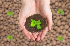 Женские руки держат кучу земли с ростком Продукт рекламы концепции экологический Стоковая Фотография