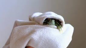Женские руки держа красно-ушастую черепаху в белом полотенце после мыть Slowmotion акции видеоматериалы