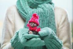 Женские руки держа милый плюшевый медвежонка Руки женщины в mittens teal показывая подарок плюшевого медвежонка одевают в шляпе и Стоковые Фото