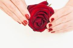 Женские руки держа не очень свежими подняли Стоковые Фото