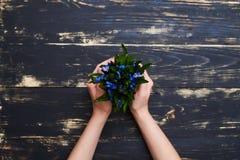 Женские руки держа цветочный горшок с голубыми snowdrops, плоское положение p Стоковая Фотография RF