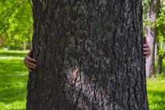 Женские руки обнимают толстый ствол дерева Крупный план рук обнимая ствол дерева стоковые изображения rf