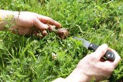 Женские руки отрезали грибы с ножом стоковые изображения rf