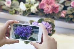 Женские руки принимая фото красивых цветков с умным телефоном на флористический магазин Красивый фиолет на экране Стоковое фото RF
