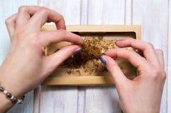 Женские руки свертывая сигары с табаком Стоковая Фотография