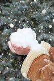 Женские руки с пригорошней снега, зимой внешней, снежными елями в лесе Стоковое фото RF