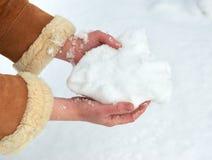 Женские руки с пригорошней снега, зимой внешней, снежными елями в лесе Стоковая Фотография