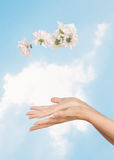 женские руки цветка Стоковые Фотографии RF