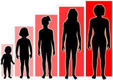 женские этапы роста Стоковое фото RF