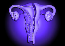 женские orgones Стоковое Фото