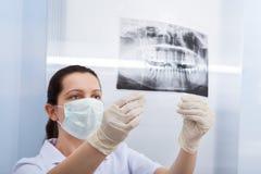 Женский дантист смотря зубоврачебный рентгеновский снимок Стоковое Изображение RF