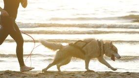 Женский бегун jogging с собаками сибирской лайки во время восхода солнца на пляже акции видеоматериалы