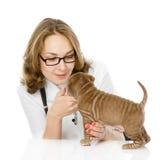 Женский ветеринар рассматривая собаку щенка sharpei. Стоковые Изображения