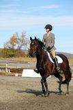 Женский всадник на лошади Брайна осенью Стоковые Изображения