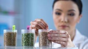 Женский исследователь кладя стикер на бутылку с семенами, развитие пестицида стоковое изображение rf