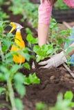 Женский работник зеленого дома вручает конец-вверх стоковые фотографии rf
